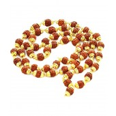 Gupta Rudraksh Collection Brown Small Rudraksh Mala